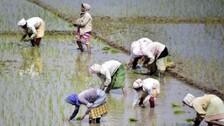 Odisha CM Releases Rs 742 Crore Assistance To Farmers Under KALIA Scheme On Nuakhai