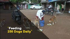 Animal Lover from Odisha Turns Saviour For Stray Dogs