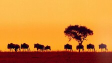 First-Ever Global Initiative To Map Mammal Migrations