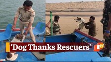 Stray Dog Marooned On Island Created Overnight By Sea Current Rescued By Odisha Forest Officials