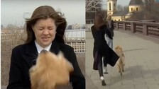 Pawsome Steal: Dog Steals Mic From Reporter During Live Broadcast | Watch