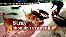 Odisha Govt Asks ULBs To Feed Stray Animals During Lockdown