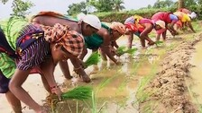 Odisha eases sharecropper registration norms in paddy procurement